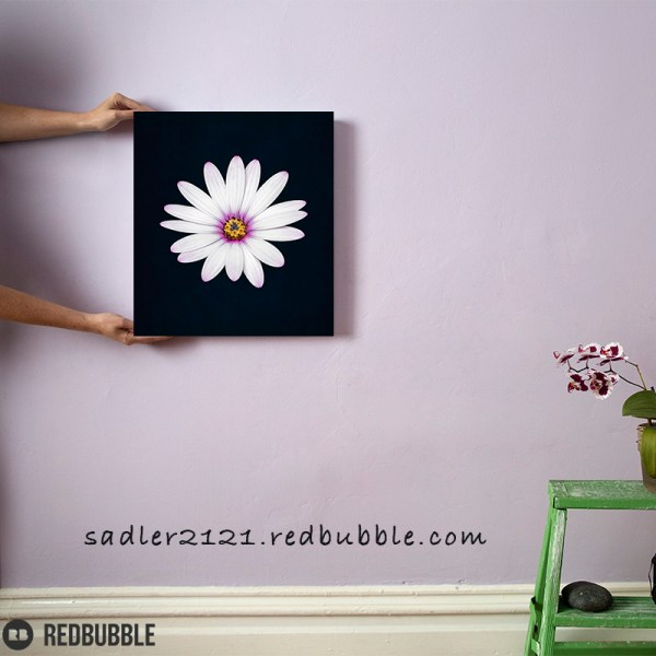White African Daisy canvas Wall art