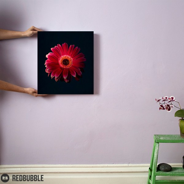 Red Gerbera canvas wall art