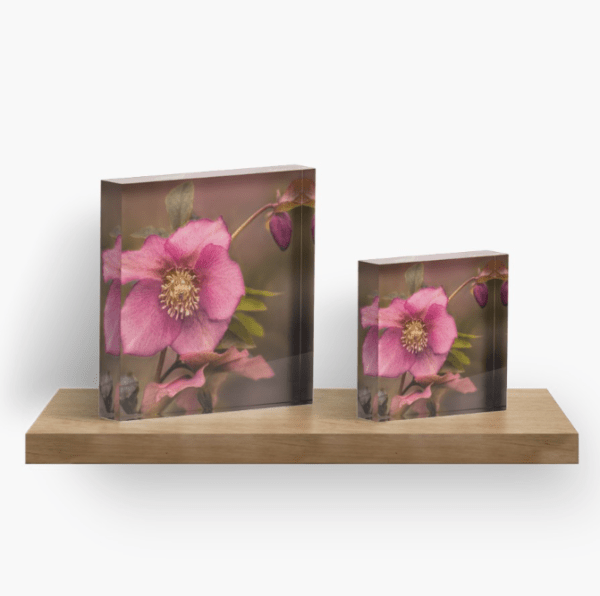 Christmas Rose Acrylic Block