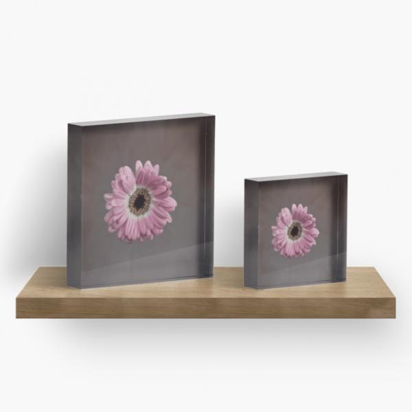 Pink Gerbera acrylic block