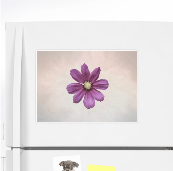 Cosmos flower sticker - extra large