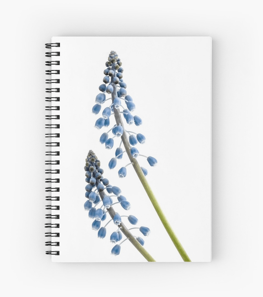 Grape Hyacinth flower notebook