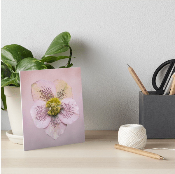 Hellebores flower Artboard