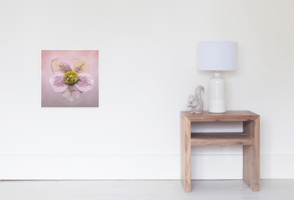 Hellebores Flower Poster