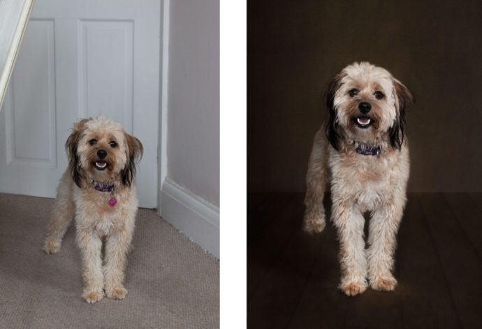 before and after - editing a dog portrait using photoshop editing