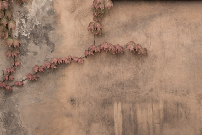 """A rustic wall used in as a backdrop for the photographic fine art series """"connections"""""""