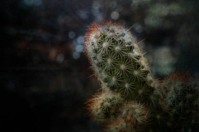 cactus light by natural light from a window