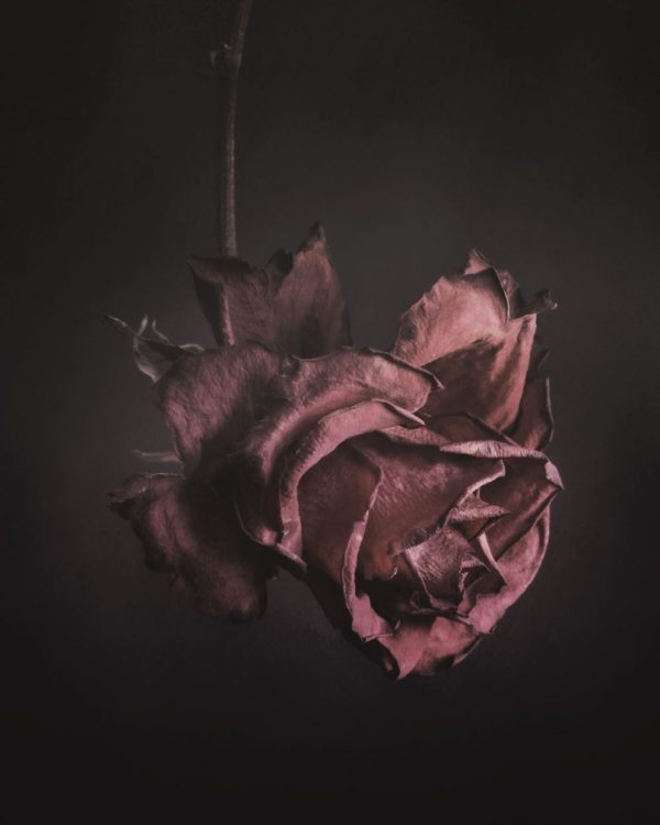 My edit on a rose for the 52 frames project