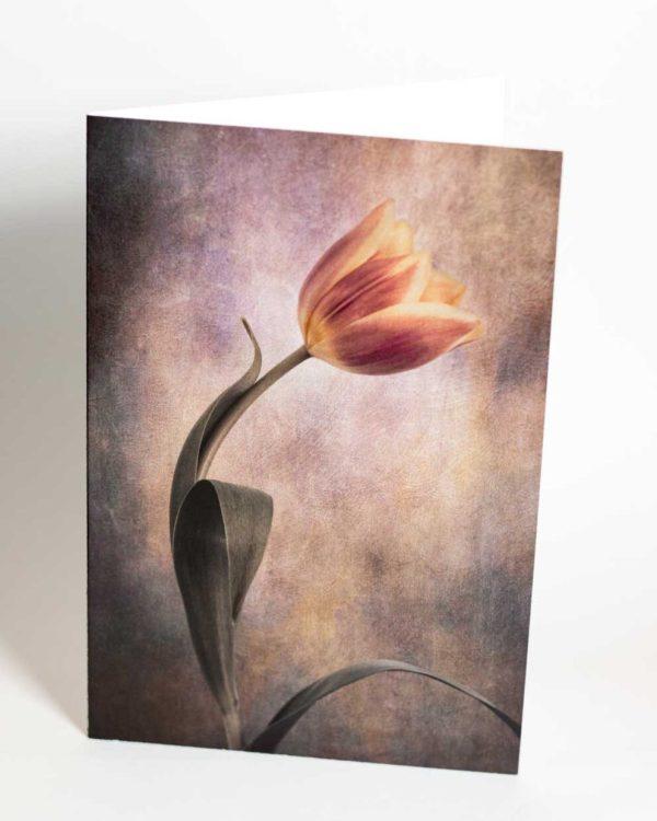 Tulip greetings card - beautiful floral art greetings cards