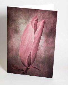 magnolia greetings card - beautiful floral art greetings cards