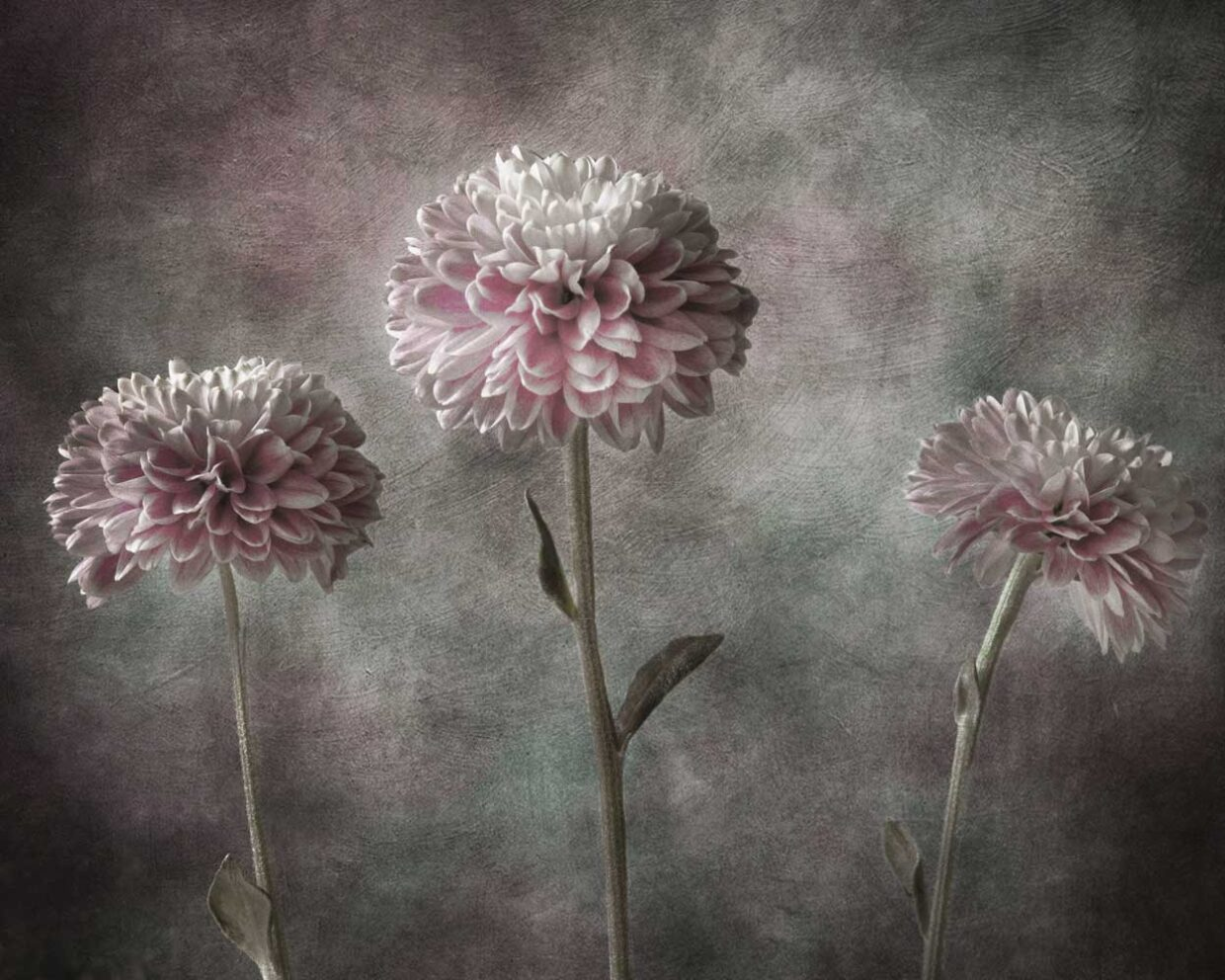 Floral art images available as prints