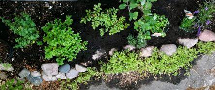 Alla plantor på plats! En salig blandning med lavendel, gräslök, perslilja, timjan, kaprifol, rosor, timjan och oregano. Och utanför bilden dvärgsyrén och smultron.