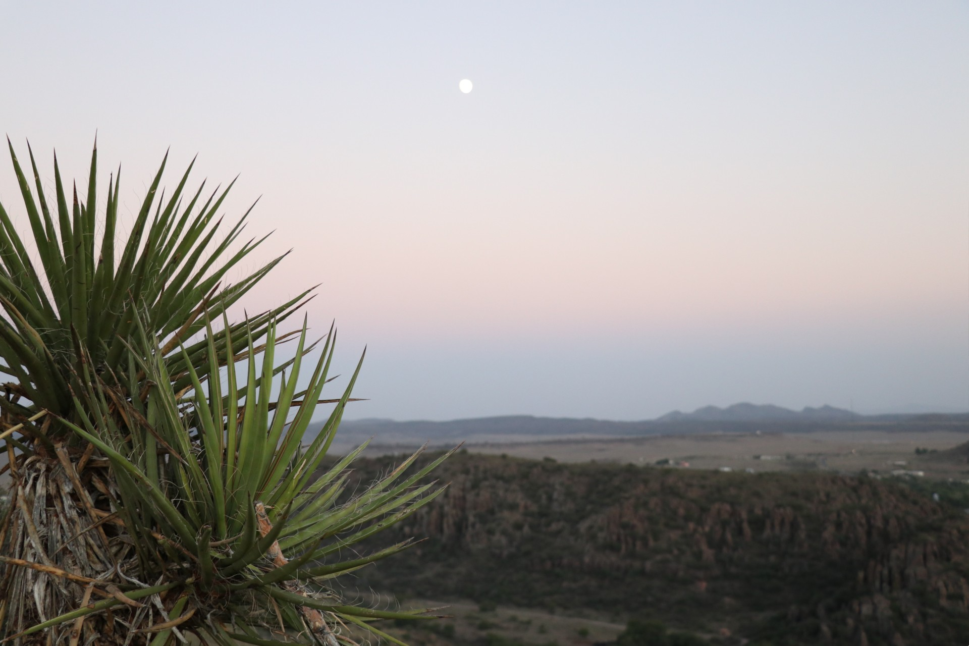 Yucca Plant Photographed By Sara Turbyfill At Davis Mountains State Park.