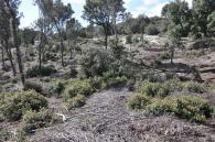 foreste domusnovas