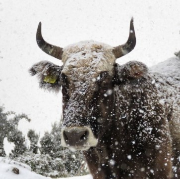 Prima neve sul Gennargentu - foto Instagram @sattasebastiano