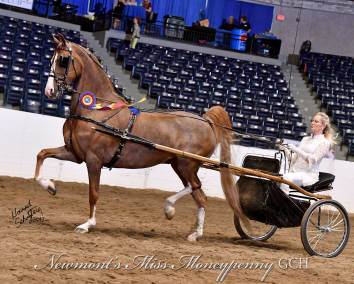 Newmont's Miss Moneypenny GCH