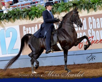 Sunny Acres Miss Scarlet