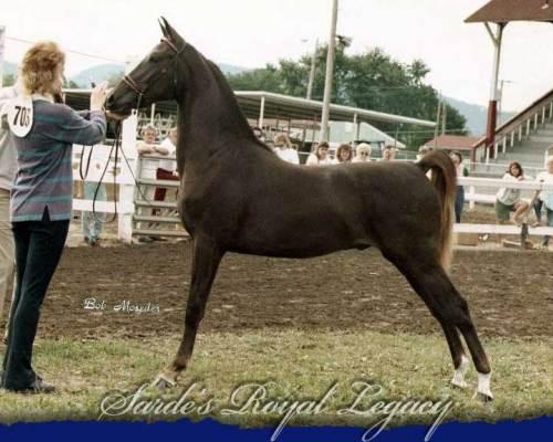 Sarde's Royal Legacy