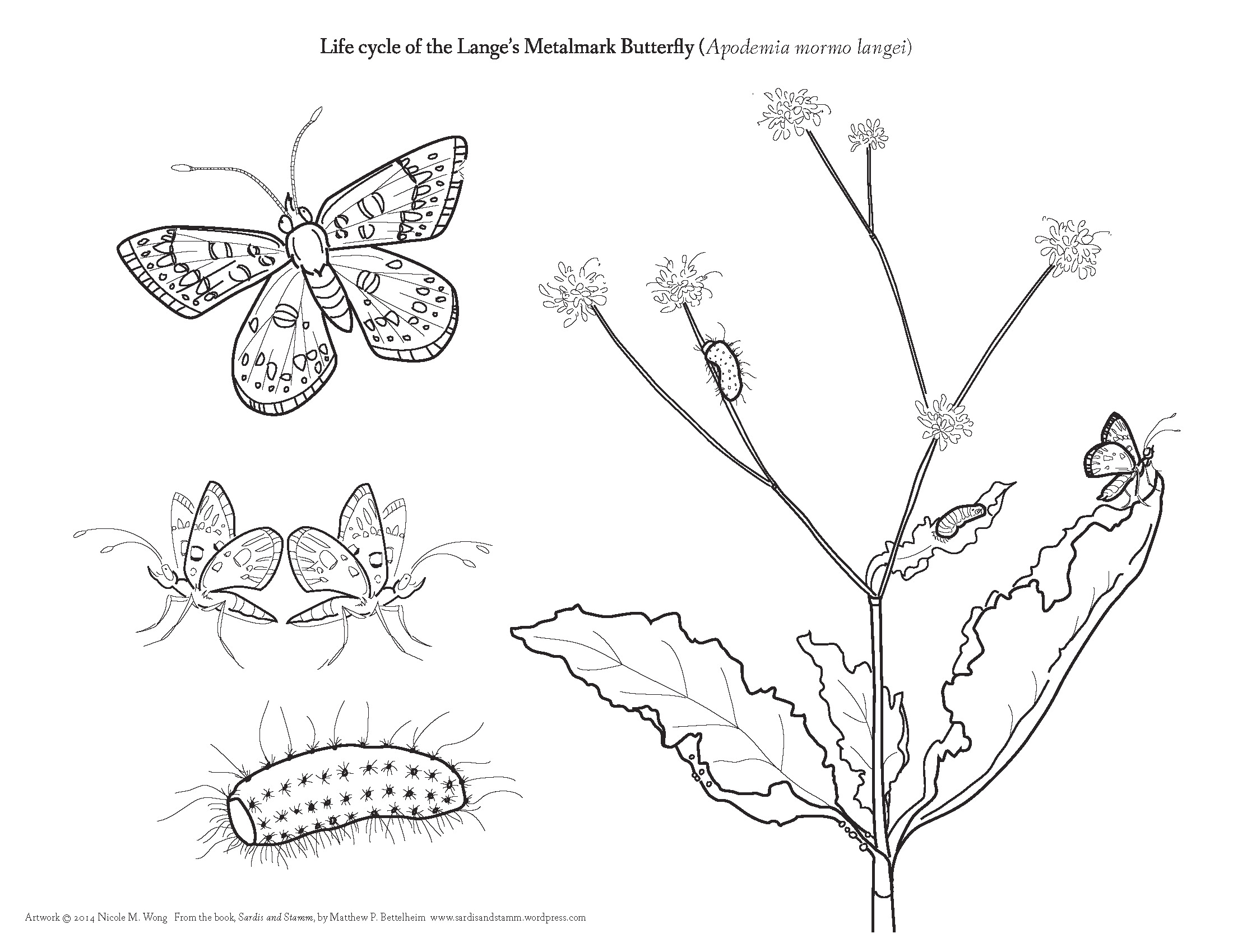 Worksheets Pond Life Coloring Coloring Pages