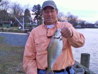 Phil Kerchner with one of the many Hickory Shad we caught this evening in a Cecil County Creek.