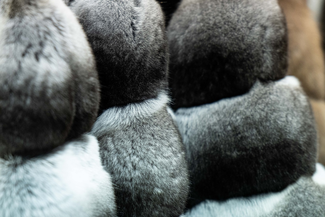 Как отличить мех шиншиллы от рекса? - Sarigianni Furs