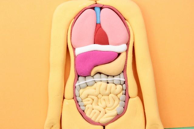 腸痩せダイエットの効果と口コミや上手なやり方!