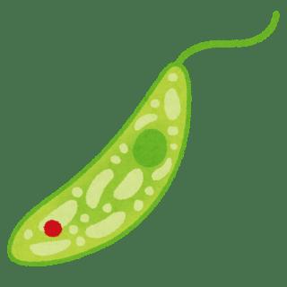 ミドリムシ(ユーグレナ)の効果や効能と栄養や口コミは?