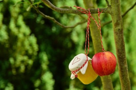 新鮮なリンゴの選び方と栄養やカロリー!