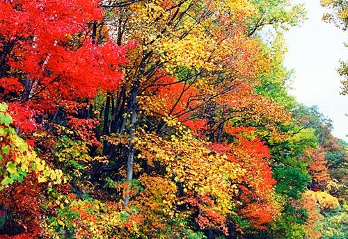 fall_view2.jpg