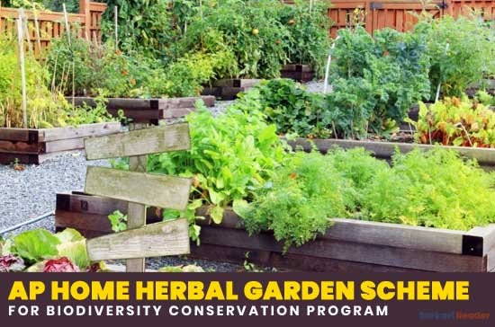 AP-Home-Herbal-Garden-Scheme