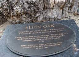 Elfin Oak, a wonderful curiosity originally carved in 1911