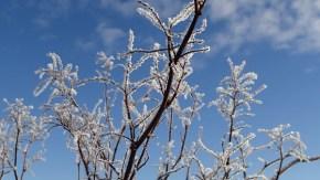 雪の利尻と樹霜