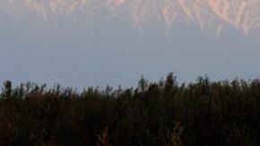 オオヒシクイ中継地の朝
