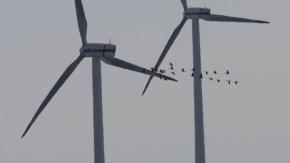 (仮称)新さらきとまない風力発電事業 配慮書縦覧中 意見書募集2/22締め切り