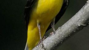 五味温泉の鳥類