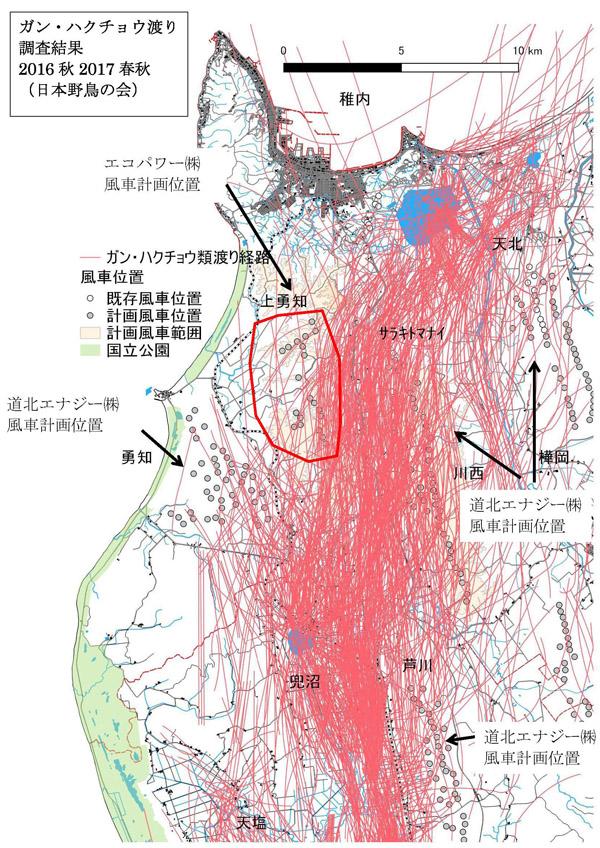 上勇知ガンハクチョウ渡り編集600