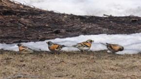 春の兜沼の野鳥