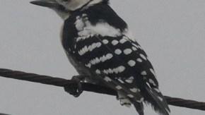 電線や街灯にとまる鳥