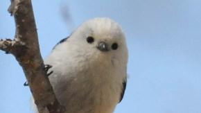 春の留鳥たち