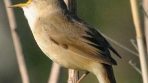天塩川沿いの小鳥
