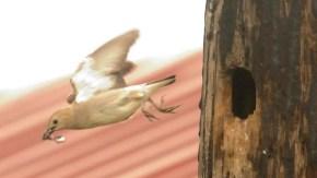 餌を運ぶ鳥たち