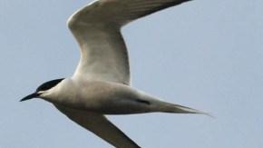 サハリンの鳥類 バイカル湾 海鳥