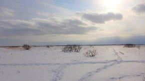 【お知らせ】冬のサロベツでインターンシップ!募集の中止について