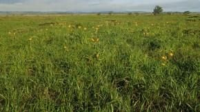 シマアオジ保護区の土地購入