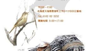 【ご案内】「川崎映 色鉛筆画展~北海道のいきものたち~」開催中7/1-8/3
