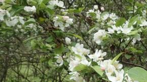豊富自然公園の花