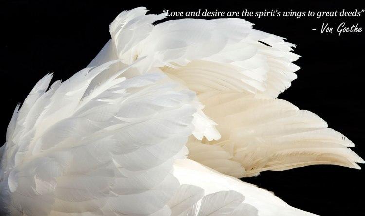wings by Gerla Brakkee