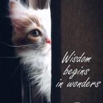 Empezando la semana 10 con alegría: Curiosidad
