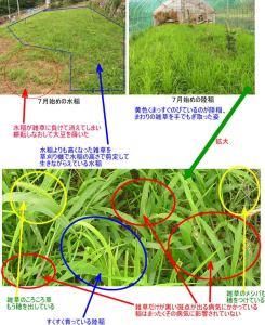 水稲陸稲病気7月初