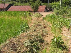 根から引き抜いた雑草を道路に山積みし、そこに剪定バーク堆肥と培養土を振りかけて、発酵堆肥の挑戦